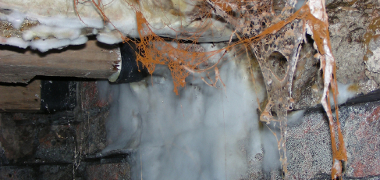 Mould Causs by damp - Damp Investigation